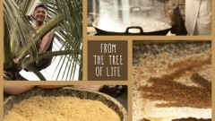How-Coconut-Sugar-is-made